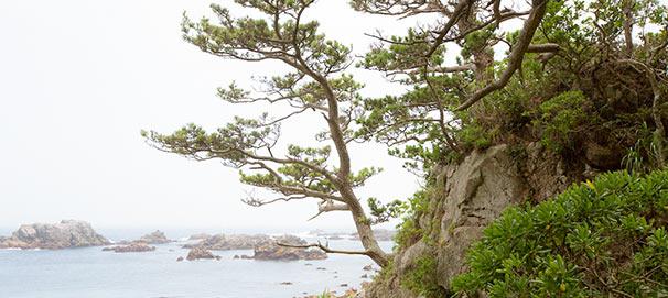 松の生えた岩礁