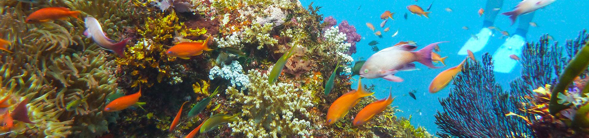diving_slide02