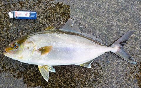 魚とライターの比較