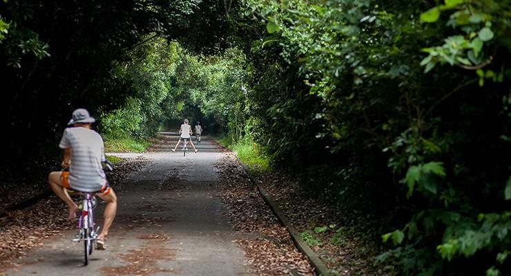 木漏れ日の中の「新島観光協会」オススメのサイクリングルート